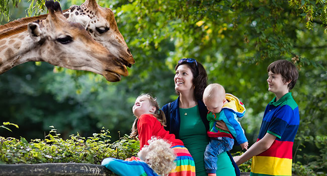 must have travel items: Wildlife & Safari Holidays