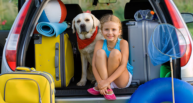 useful travel accessories: Traveling Accessories for Pet Lovers