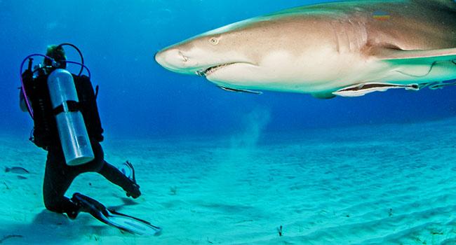 scuba diving gear: Safety Equipment