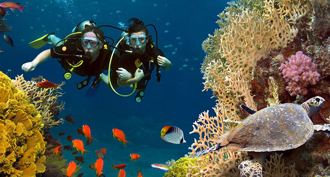 Scuba Diving Gear: What You Need to Think about before Choosing the Best One