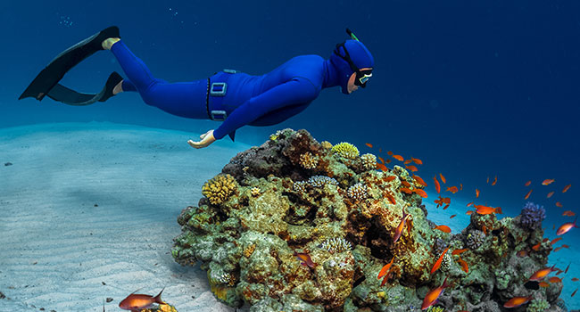 scuba diving gear: Underwater Diving Suits