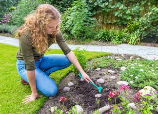 How to Maintain and Manage Your Lawn